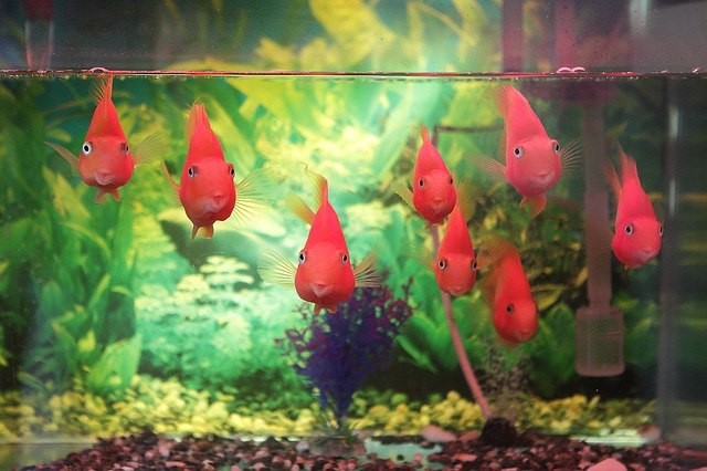 The Fish Tank Avatar: A Surprising Way to Discover Who Your Ideal Client Is
